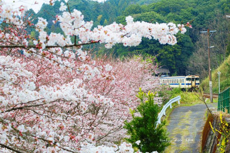 chikuiwa44.jpg