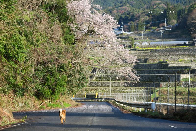 chikuiwa54.jpg
