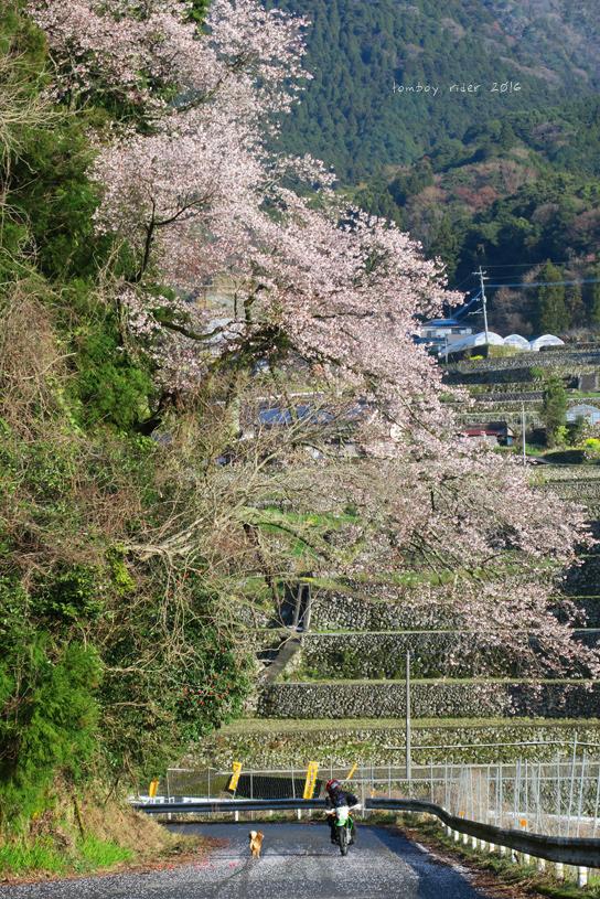 chikuiwa55.jpg