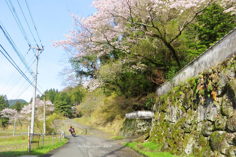 chikuiwa60.jpg