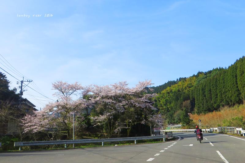 chikuiwa61.jpg