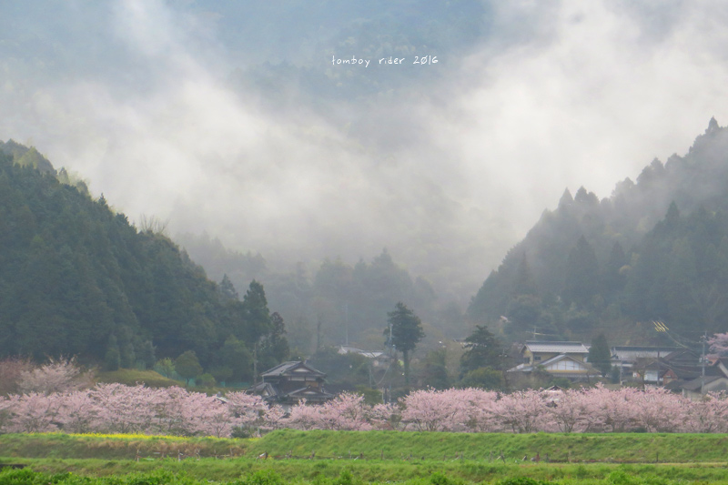 chikuiwa62.jpg