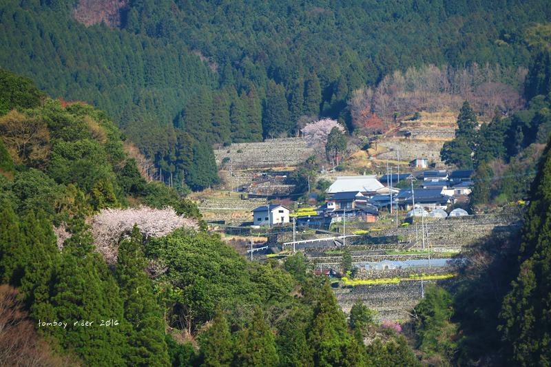 chikuiwa68.jpg