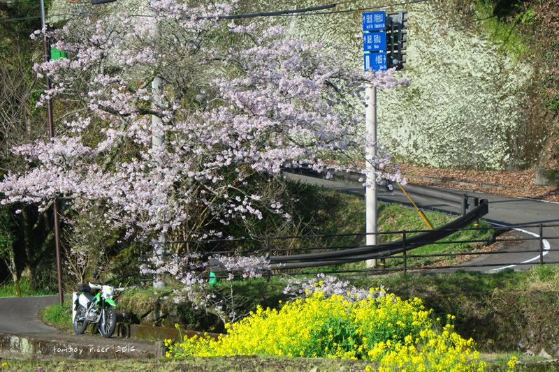 chikuiwa73.jpg