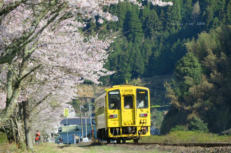 chikuiwa74.jpg