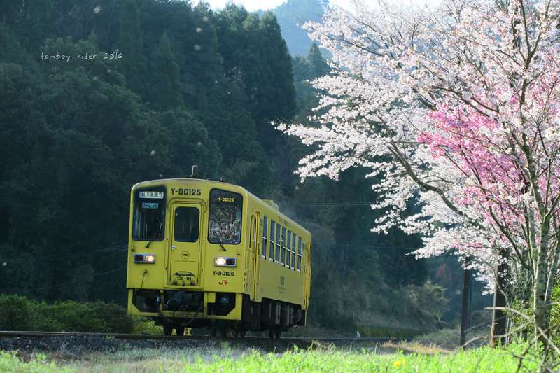 chikuiwa75.jpg