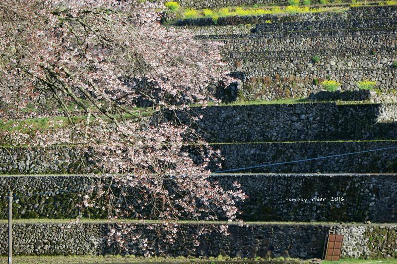 chikuiwa77.jpg