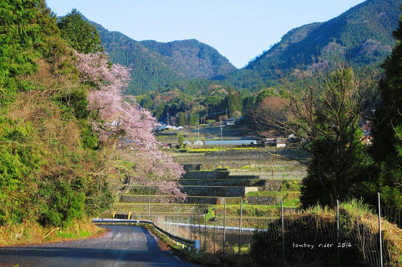 chikuiwa78.jpg