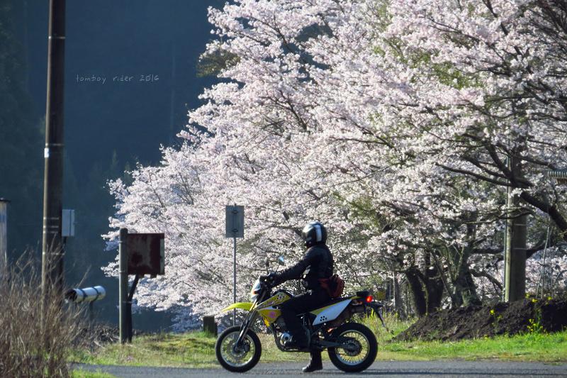 chikuiwa79.jpg