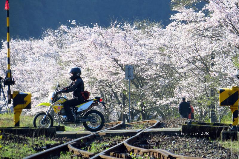 chikuiwa80.jpg