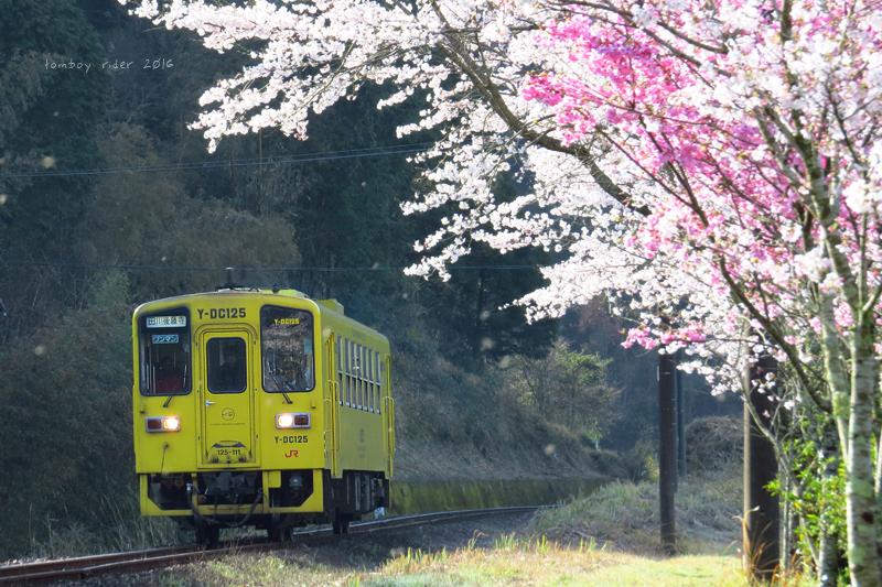 chikuiwa82.jpg