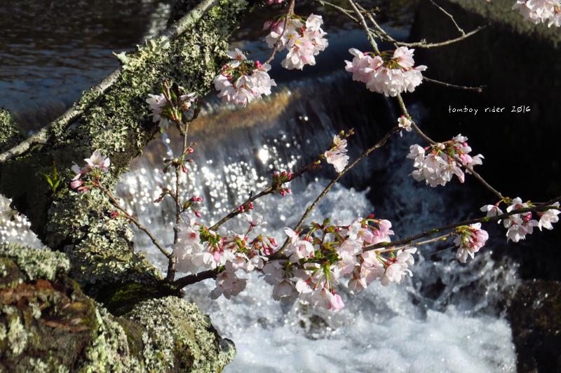 chikuiwa83.jpg