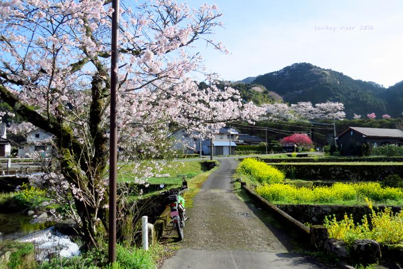 chikuiwa84.jpg