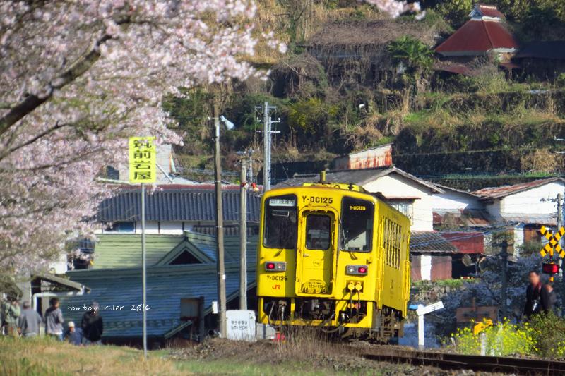 chikuiwa85.jpg