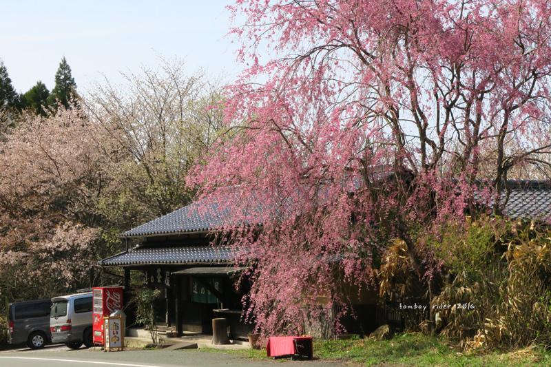 hikohoshi34.jpg