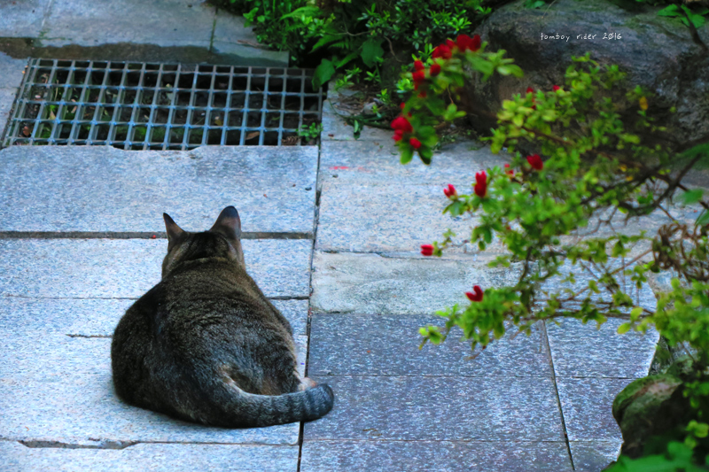 tsuekoi19.jpg