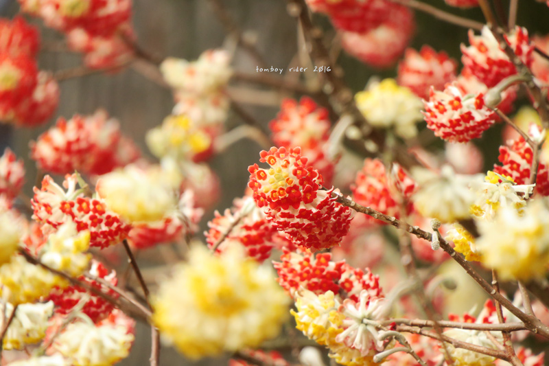 hikohoshi32.jpg