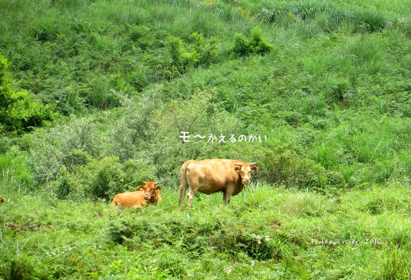minaoguni131.jpg