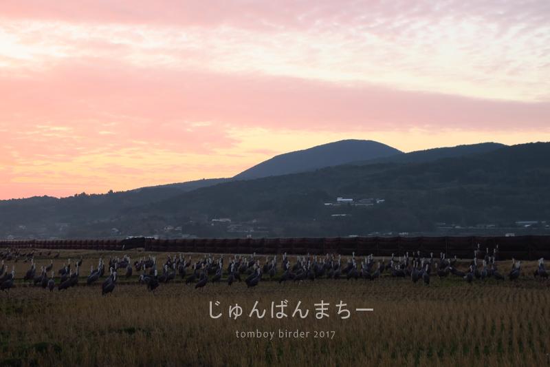 chog46.jpg