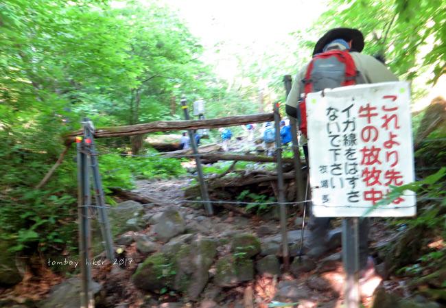 hiiiji36.jpg