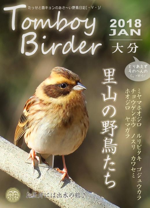 野鳥2016深倉峡5月.jpg