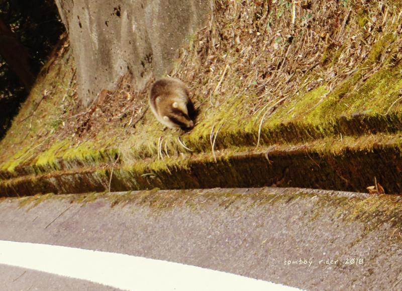 kenono97].jpg