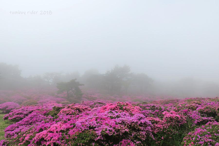 miyano32.jpg