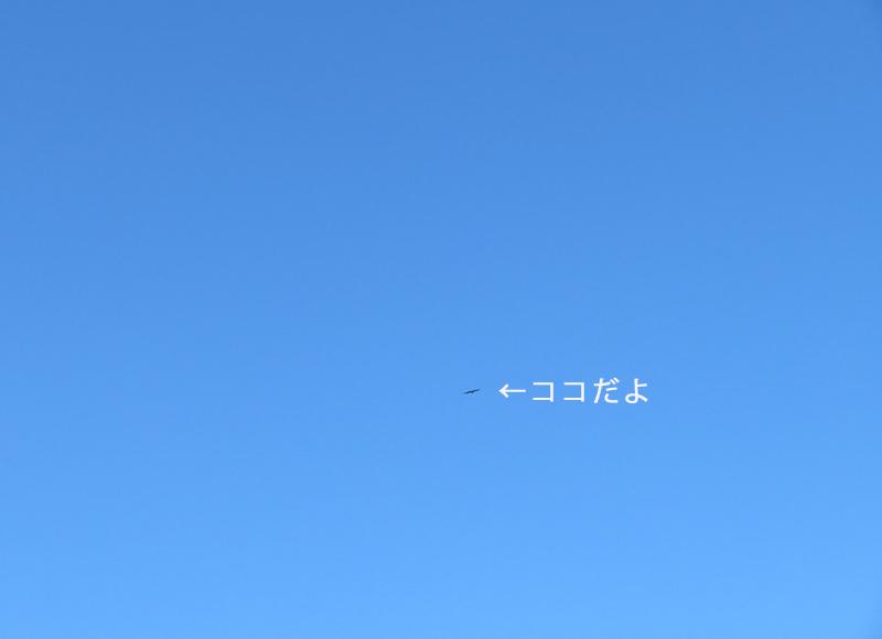 fkka120.jpg