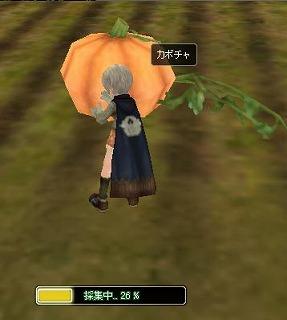 かぼちゃ採集