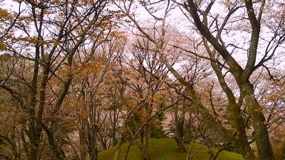 丸山公園2016.4