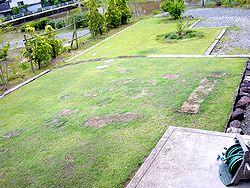 芝生いじり