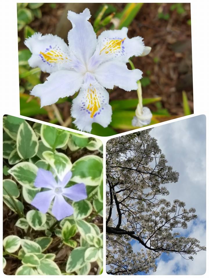 野に咲くお花
