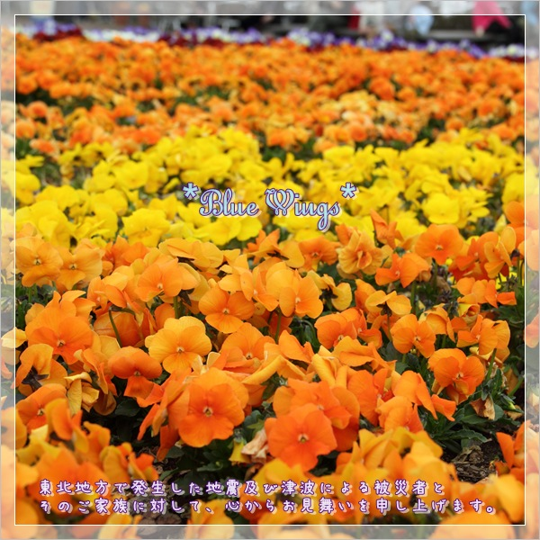 2011051301画像