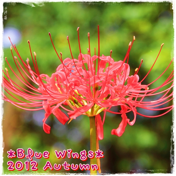 2012101002画像