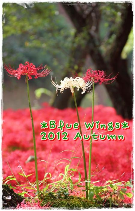 20121010016画像
