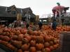 STEWLEONARDかぼちゃ売り場