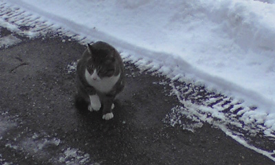 雪が好きな猫