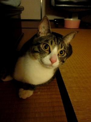 うちの猫ルドルフ