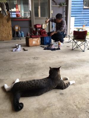 猫と発動機