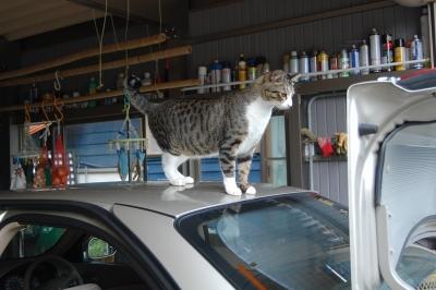 サニーの上に猫
