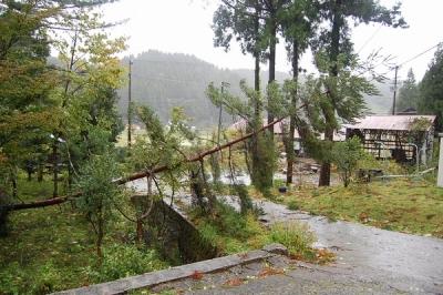 台風21号で倒れた木