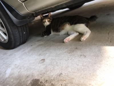 クルマの下のネコ