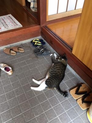 玄関で寝る猫
