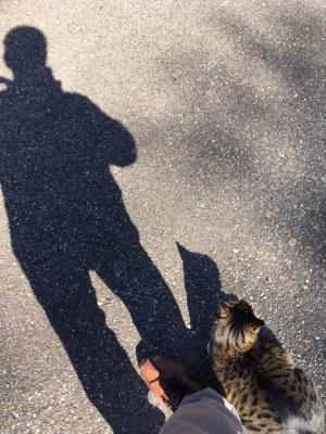 日曜の朝、猫と