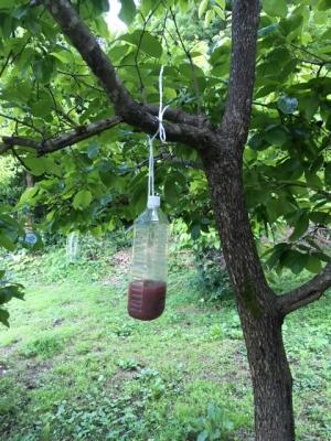 スズメバチ捕獲器設置