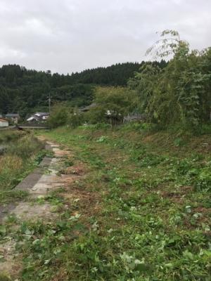三井地区草刈り