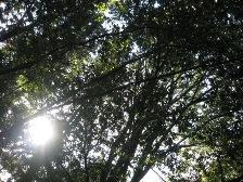 森林だけでも癒されます