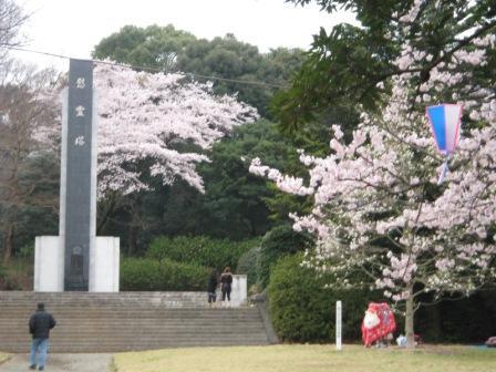 慰霊塔の桜