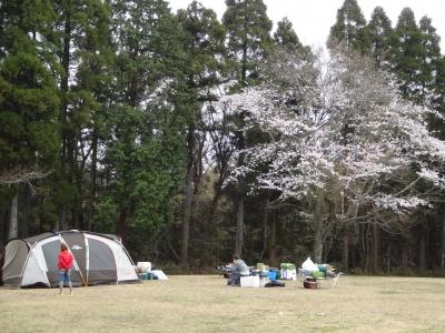 20160401桜キャンプ
