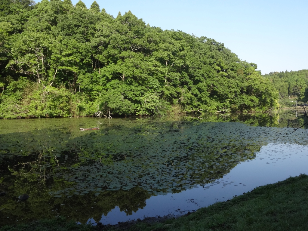 20170519下タ田池